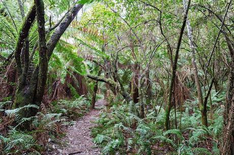 fern gully near the canyon lorne