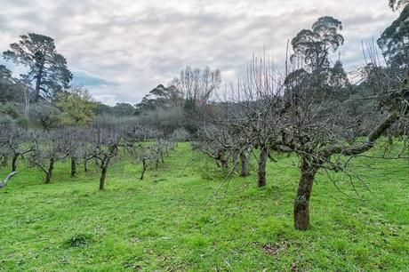 apple orchard lorne