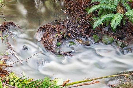 long exposure of leaves henderson creek lorne