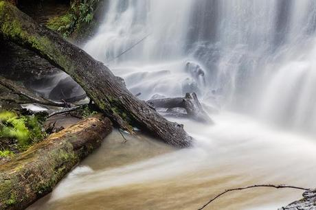 tree branches beneath henderson falls lorne