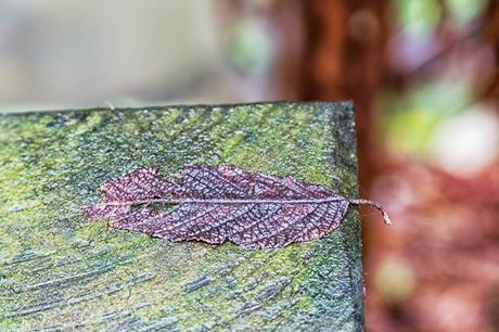 leaf on timber walkway