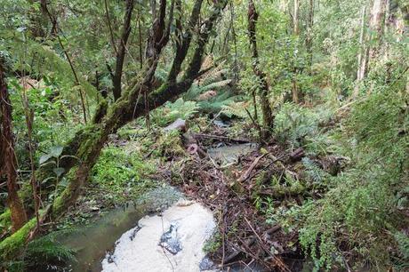fern gully at henderson creek lorne