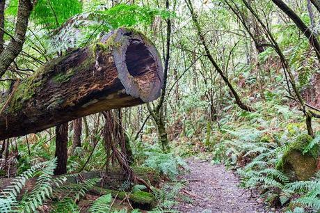 track in fern gully lorne