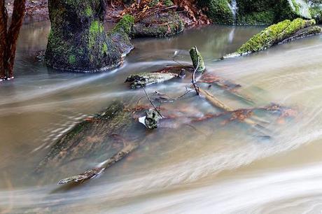 leaves in henderson creek