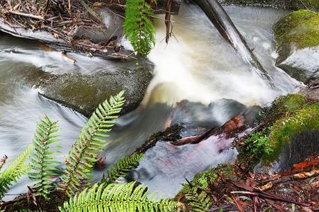 rocks in henderson creek lorne