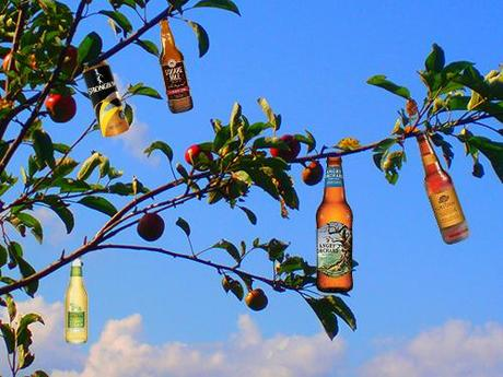 branch_apple_tree_cider