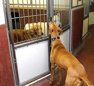 VIDEO: Who Let the DOGS Out?: The Great Shelter Escape!