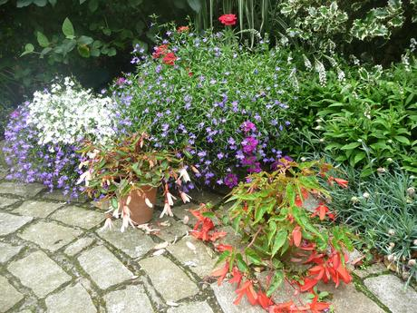 Keeping your summer containers going