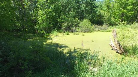 pond -  where painted turtles live near forks of the credit - ontario