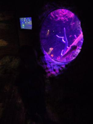 Holiday, Day 2 (Part 2!) – Sea Life, Manchester