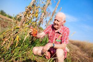 Monsanto's GMO Crops Already Planted in North Dakota
