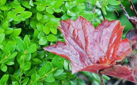 Plant combos