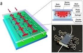 Solar Cells Mimic Natural Processes To Self-Heal: Research Suggests