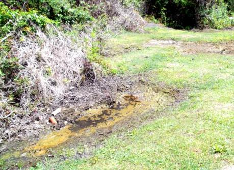 Residents Seek Environmental Justice in GA By Suing City for Decades of Sewage Dumping
