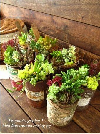 tin can succulent planter