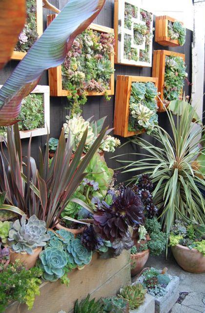 succulent wall box
