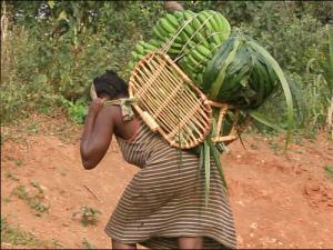 An African woman farmer suffering all the weight of her harvest.