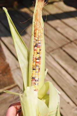 And Now -- Glass Gem Corn!