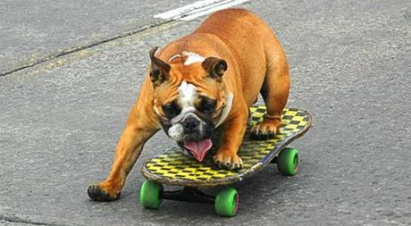 Bulldogs attend School for EXTREME DOG Sports!