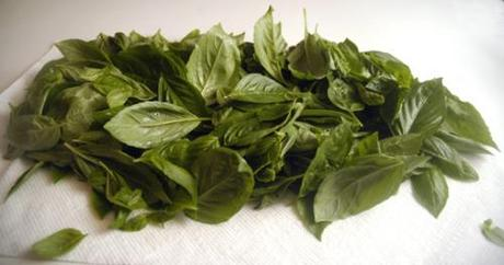 This is only a fraction of basil leaves on my plants!