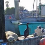 Seal and bird