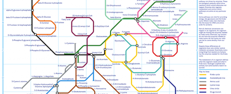 A subway map of metabolism infographic