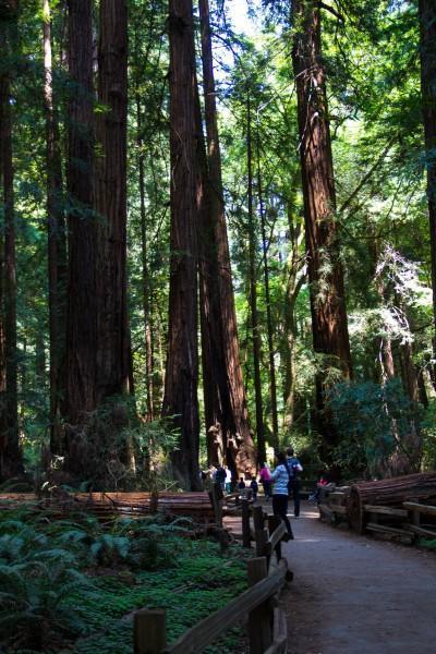 muir woods 4 400x600 San Francisco: Golden Gate Bridge and Muir Woods