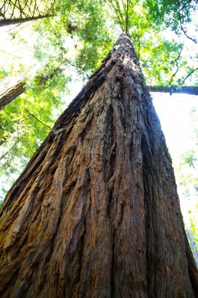 muir woods 5 400x600 San Francisco: Golden Gate Bridge and Muir Woods