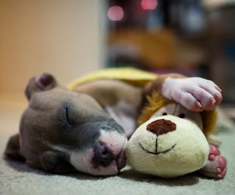 awesome dog photos