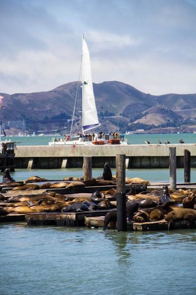 pier 39 2 400x600 San Francisco: Alcatraz and Walking Around Downtown
