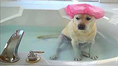 Συχνό μπάνιο το καλοκαίρι...