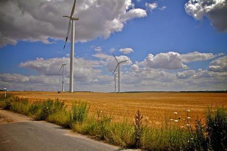 Windmill plants