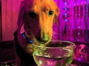 DOGS Gone Wild: Pooches Celebrate TGIF Rave Party!