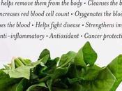 Benefits Chlorophyll
