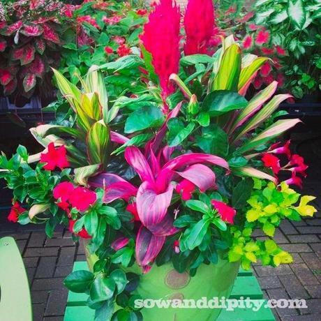 pink green planter