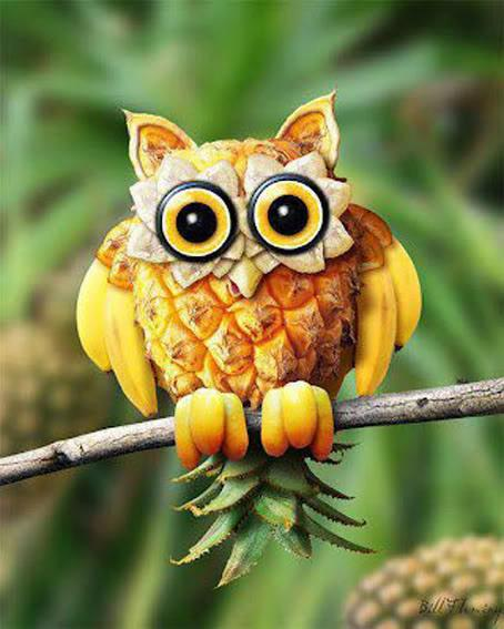 Owl out of fruit