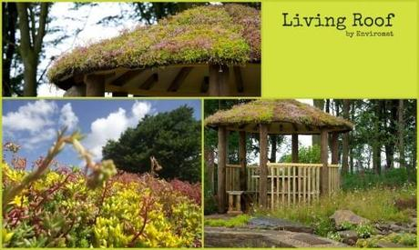 picture collage of living roof