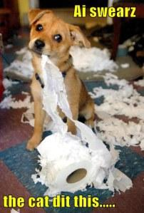 Funny Doggies Paperblog