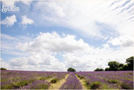 UK lavender field mayfield engagement