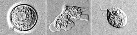 The CDC says it's found Naegleria fowleri, an almost always deadly amoeba, in drinking water supplies for the first time in the United States.