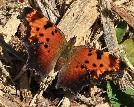 Butterfly hunting at the Horseshoe Bend Preserve