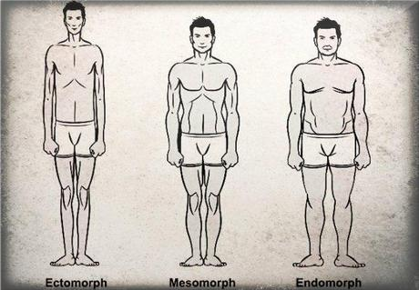 The three major body types.