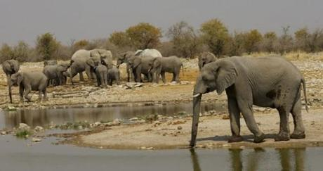 Herd of elephants at a water hole in Etosha, Namibia