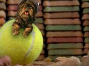 VIDEO PARODY: Rides Tennis Wrecking Ball!