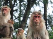 POEM: Monkeys Make Smile