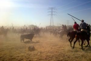 El Toro de la Vega Tournament, 2012. [photo: la marea]