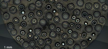 Cross-section of fuel pellet containing TRISO particles at 10 mm scale. (Credit: Idaho National Laboratory via Flickr http://www.flickr.com/photos/inl/)