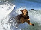 EXTREME WATER SPORTS: DOGS Surf California Waves!