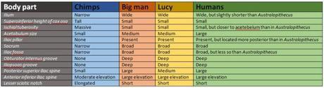 Incomplete list of anatomical traits of chimps, BM, Lucy and humans. Taken from the supplementary information of An early Australopithecus afarensis postcranium from Woranso-Mille, Ethiopia