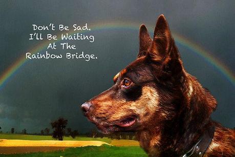 When Your Pet Dog Dies - Paperblog